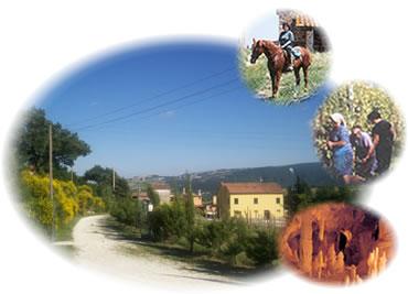 Agriturismo - B&B Ziamelia Colli del vino ``Verdicchio`` tra Jesi e Cingoli