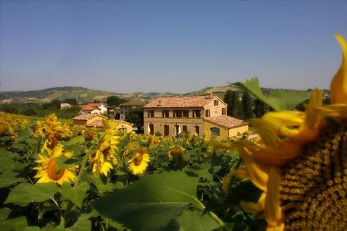 | Case per ferie | Appartamenti | Agriturismo | Aziende agricole | Agriturismo La Vecchia Fonte Castelbellino